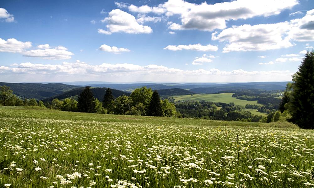 Wiese mit Panoramablick